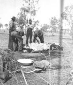 Stockmen butchering a bullock. The hide was removed from the back rather than the belly in such a way as to keep the carcass free from dirt. The green branches in the foreground would be used to help it cool and the majority of the meat would be corned or salted. Fresh ribs and steaks would have only been possible for the first couple of days of a long drive.